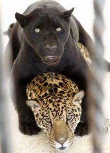 Скачать книгу регины мартюшевой попаданка из черных пантер